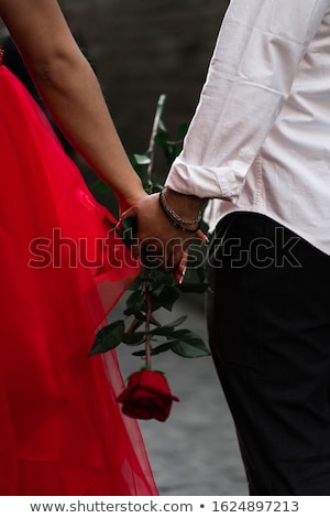 one rose represented on background stock photo © artjazz