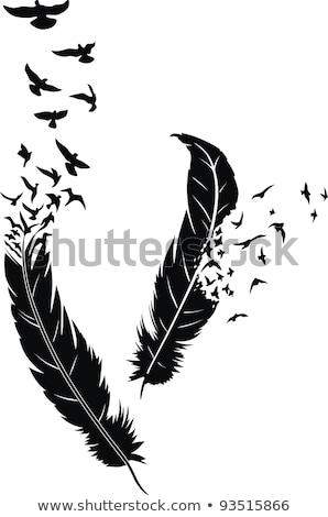 Bird's feather Stock photo © vapi
