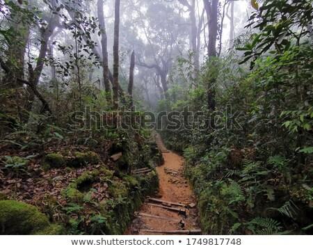 Pad bos Maleisië boom hout natuur Stockfoto © IS2