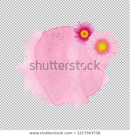 Roze vlek transparant bloemen voorjaar gelukkig Stockfoto © adamson
