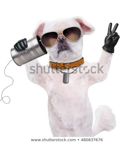 Feio cão falante desenho animado ilustração gráfico Foto stock © cthoman