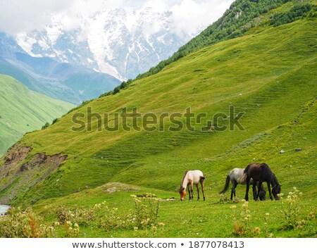 Stock fotó: Ló · testtartás · hegyek · Grúzia · szürke · ősz
