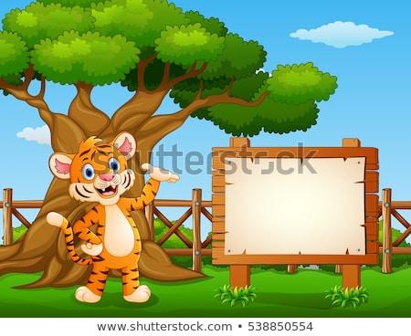 Ramki szablon tygrysy dziedzinie ilustracja charakter Zdjęcia stock © colematt