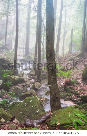 Stream mist vallei Blauw bergen bladeren Stockfoto © lovleah