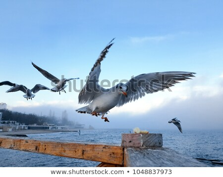 Seagulls on a Railing Stock photo © brianguest