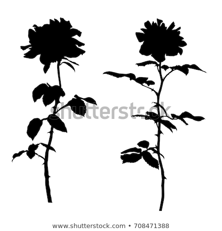 Different types of flowers and silhouette Stock photo © colematt