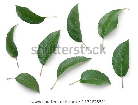 Foto stock: Manzana · hojas · aislado · blanco · superior · vista