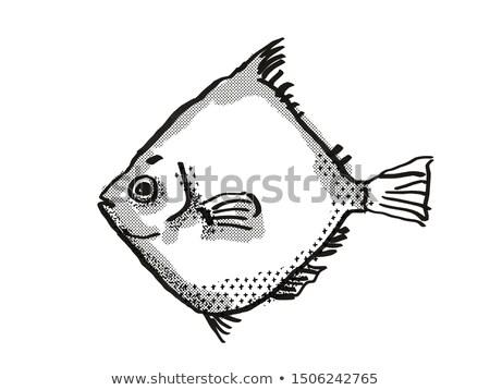 Rosy Deepsea Boarfish Australian Fish Cartoon Retro Drawing Stock photo © patrimonio