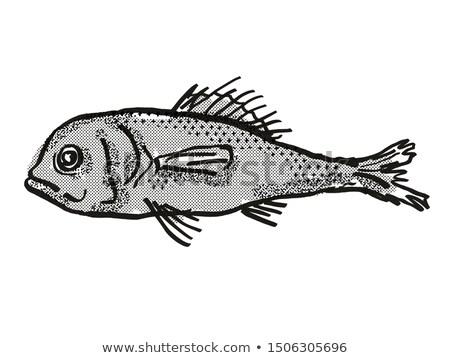 Brew australijczyk ryb cartoon retro rysunek Zdjęcia stock © patrimonio