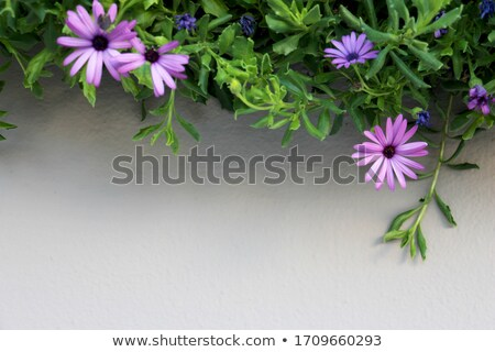 Plant pattern above garden center. Stock photo © artjazz