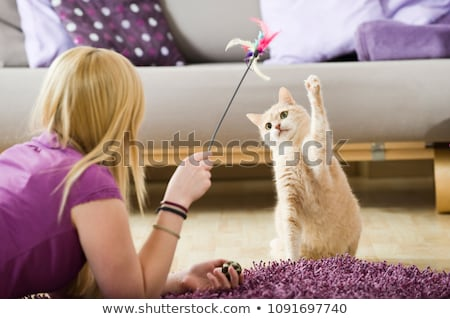 cat is playing stock photo © ansonstock