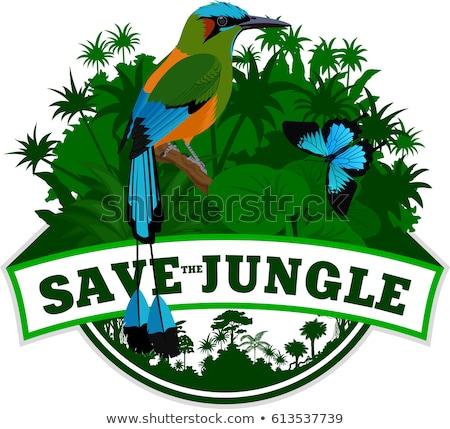 Turquoise-browed motmot in Costa Rica jungle stock photo © mtilghma