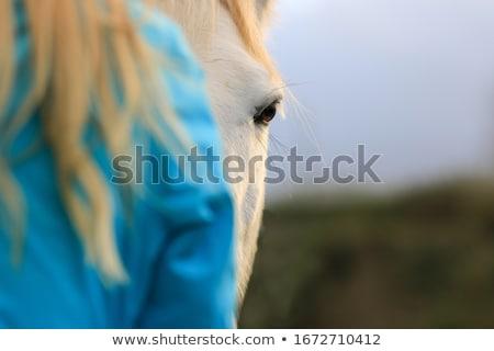 警告 · ブラウン · 馬 · 肖像 · 好奇心の強い · 安定した - ストックフォト © chrisroll