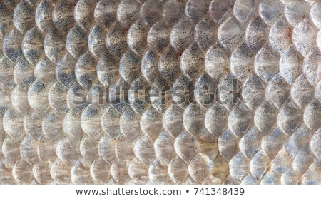 Close-up fresh natural meat background stock photo © shutswis