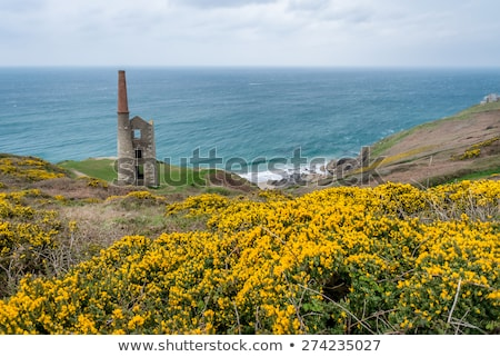 Cornwall moutons raide Photo stock © mosnell