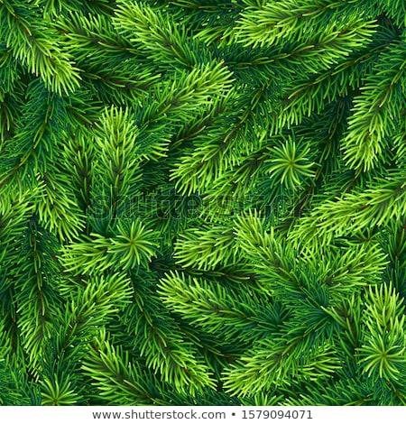 tracery vector fir Stock photo © butenkow