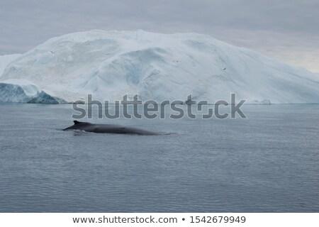 Buzul yüzey park Alaska su Stok fotoğraf © snyfer