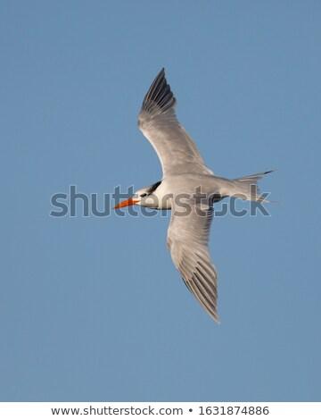 gaivota · voador · acima · água · blue · sky · mar - foto stock © michaklootwijk