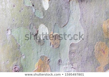 Patroon vliegtuig schors boom muur abstract Stockfoto © meinzahn