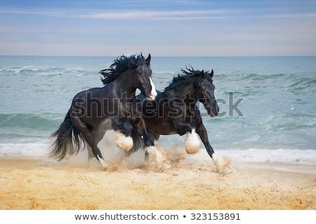 западной морем лошади пушки Cowboy Сток-фото © lenm