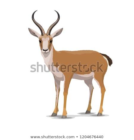 Antelope in the zoo. Stock photo © rglinsky77