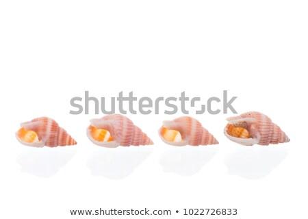 Egy kagyló fotó fehér tenger szépség Stock fotó © Marfot