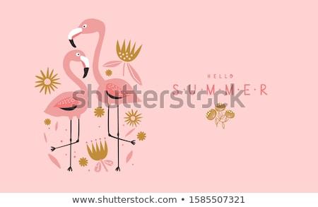 Kettő rózsaszín flamingó tavacska állatkert Olaszország Stock fotó © master1305