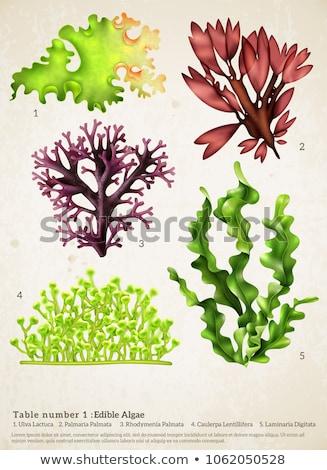 зеленый · морские · водоросли · подробность · желтый · воды · фон - Сток-фото © olandsfokus