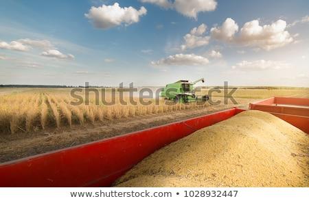 Tarım alan hasat buğday İsrail Stok fotoğraf © rglinsky77