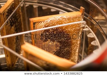 bee · honingbij · honing · bloem · voorjaar - stockfoto © jordanrusev