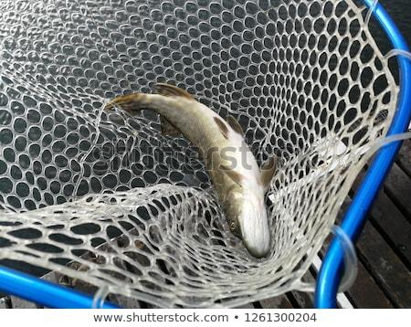 Pescaria água madeira peixe modelo branco Foto stock © c12