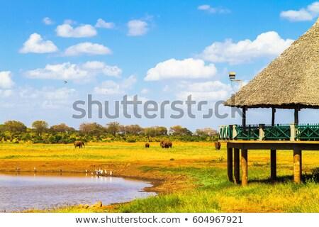 Stock fotó: Szavanna · panoráma · park · Kenya · Afrika · égbolt