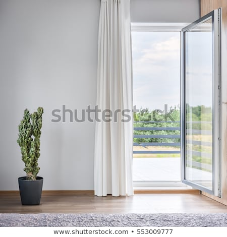 A window with a cactus Stock photo © bluering