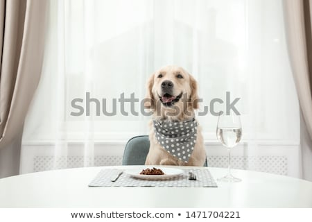 A table with a dog Stock photo © bluering