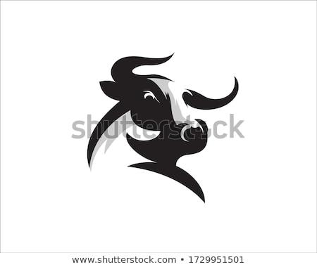 Foto stock: Design · de · logotipo · eps · fundo · vaca · assinar · azul