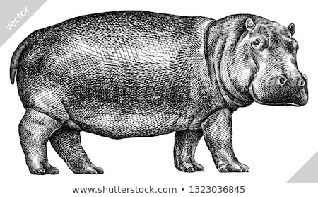 hippo in the jungle Stock photo © adrenalina