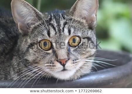 猫 演奏 葉 ストックフォト © spanishalex