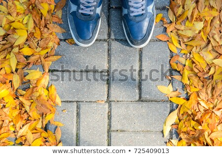 Standing on the ground covered with autumn leaves Stock photo © stevanovicigor