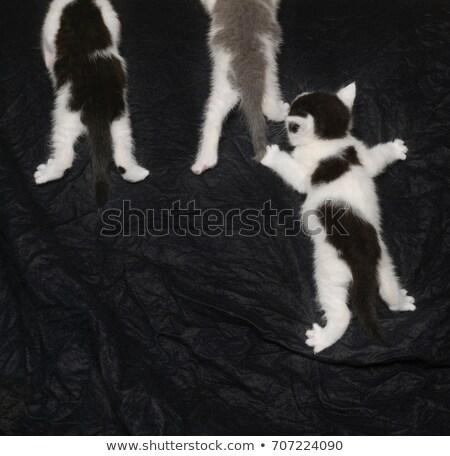 Kittens klimmen omhoog zwarte huisdier parcours Stockfoto © IS2