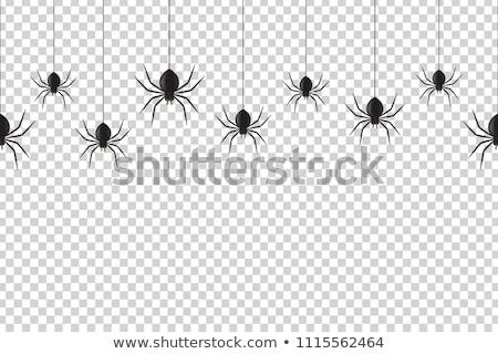 zwarte · weduwe · spin · dauw · web · benen - stockfoto © adrenalina