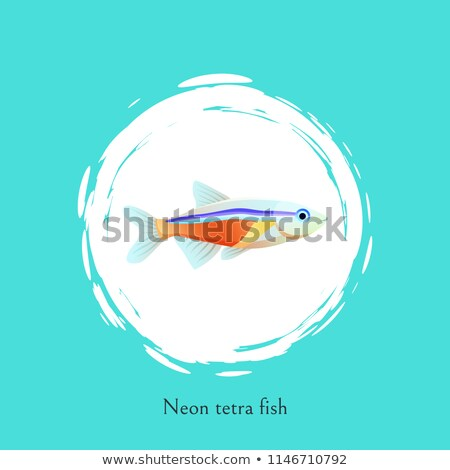 neon tetra fish in white circle isolated on blue stock photo © robuart