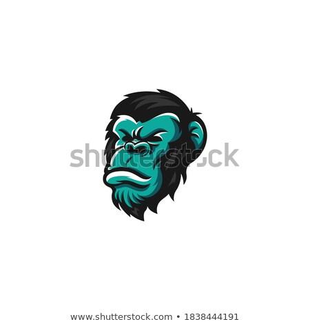Funky monkeys Stock photo © colematt