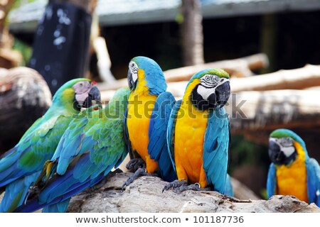 Animals in Zoo in Bangkok Stock photo © bloodua