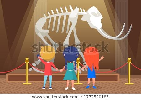 Múzeum csontváz kiállítás vektor lény oktatás Stock fotó © robuart