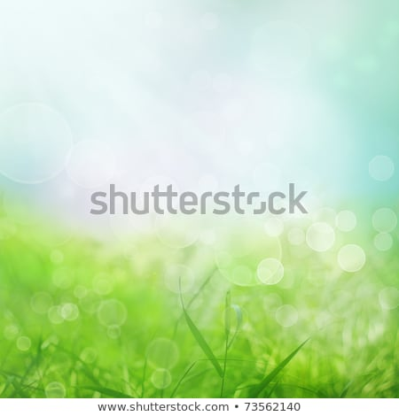 Wallpaper Green Herb And Sky Photo stock © mythja