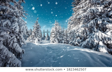 snowy landscapes Stock photo © photography33