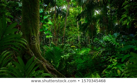 tropical pristine rain forest background Stock photo © kikkerdirk