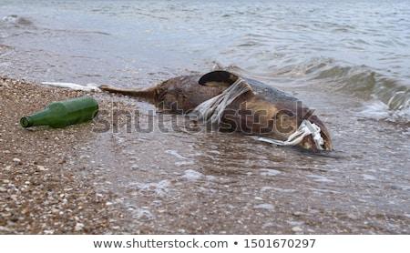 dead dolphin Stock photo © smithore