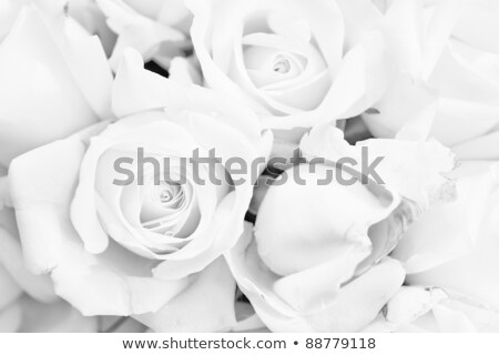 Menyasszony rózsa fátyol fekete fiatal lány Stock fotó © pzaxe