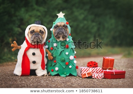 christmas · obcasy · klasyczny · stylu · zdjęcie - zdjęcia stock © photography33